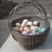 农村散养土鸡蛋,纯粮食喂养鸡蛋